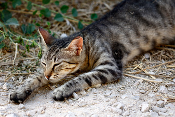 Sleeping feral striped cat in the countryside