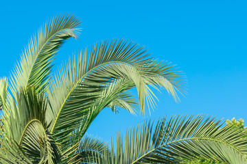 Branches of tropical palm tree, on sky background