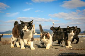 猫島の野良猫たちの生活 Wall mural