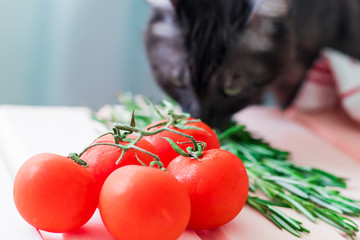 Cherry tomatoes branch with green rosmary on wooden colored table and cat on background