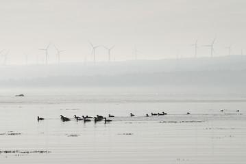 éolienne dans le brouillard
