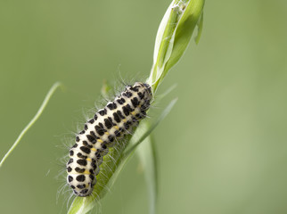 caterpillar on a grass