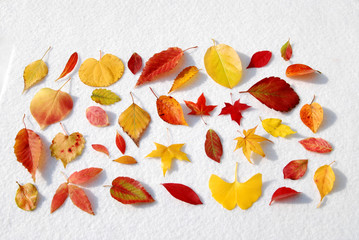 울긋불긋단풍잎