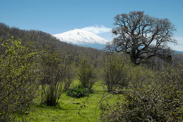 Wall Mural - Wild View Under Snowy Etna Mount From Nebrodi Park, Sicily