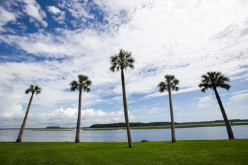 Palm Trees overlooking the water