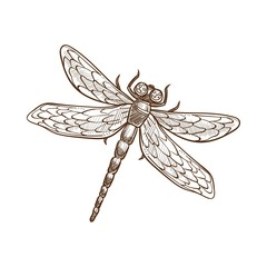 Dragonfly fast-flying long-bodied predatory insect with two pairs of wings