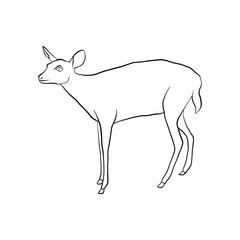 vector drawing doe