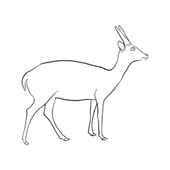 vector drawing antelope