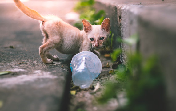 close up little skinny poor stray kitten or cat looking at an empty plastic cup of water near footpath