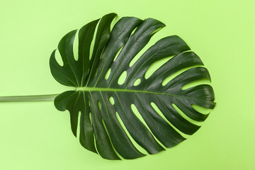 Fashion background with Monstera leaf