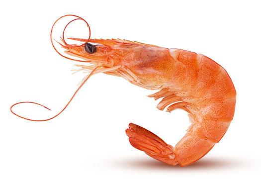 Сooked tiger shrimps