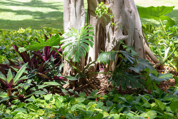 Exotic plants encountered while visiting Mexico.