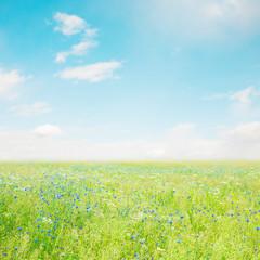 Beautiful Nature Summer Flower landscape
