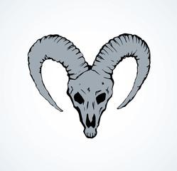 Skull of ox. Vector drawing