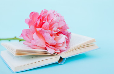 Peony flower and book on blue background