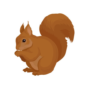 Flat vector icon of brown squirrel. Forest rodent with shiny eye and big fluffy tail. Wildlife theme. Element for book or poster