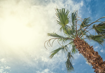 Bottom-up view of beautiful palm tree with blue sunny sky
