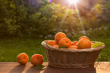 Basket with fresh juicy apricots .
