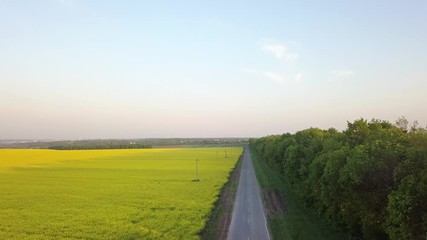 Wall Mural - Aerial panoramic video from a drone a bird's eye view to the field with bright-yellow flowering plant Rapeseed and strip of green plantations along the road. 4K video.