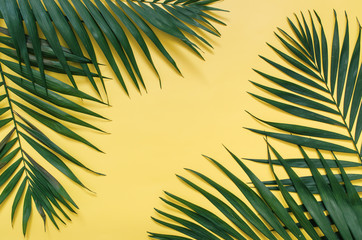 Tropical palm leaves border frame isolated on pastel yellow background isolated