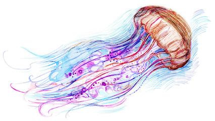 Jelly fish watercolor illustration. Hand drawn medusa