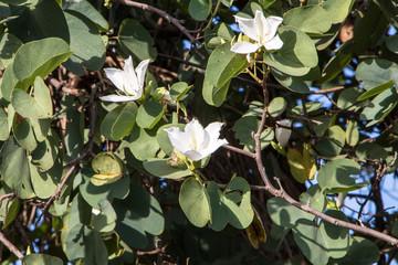 Árvore com flores brancas