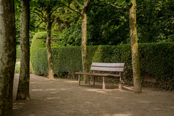 bench in park surrounded by trees and a hedge