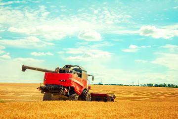 harvester harvests wheat on field