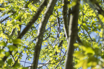 Tree foliage -Spring leaves background