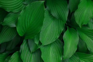 green plant background garden