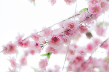 fake sakura on isolated