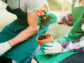 Couple during gardening, girl puts in a vase flower plant. They are in a field and are dressed in gardeners' clothes