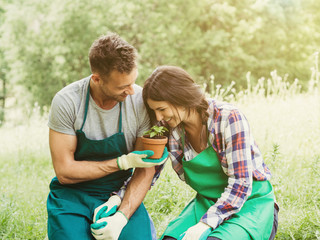 Loving couple have fun in gardening. The man approaches a basil plant to the woman's nose to make her smell