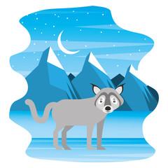 canadian wolf in winter landscape