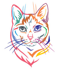 Colorful decorative portrait of Mongrel Cat vector illustration