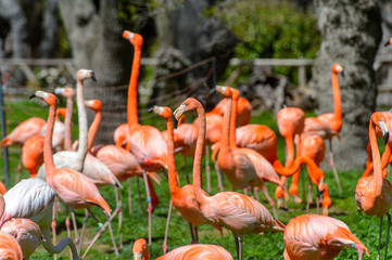 Flock of Flamingos in the zoo
