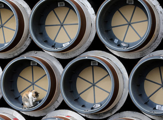 Cat rests among pipes meant to be used for construction in terminated South Stream gas project, stored in the Black Sea port of Varna