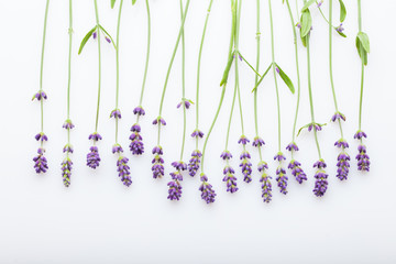 Lavender flowers on a white background