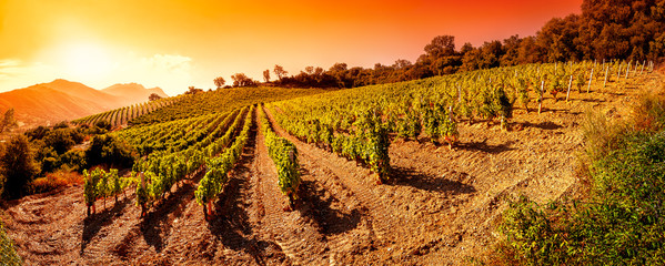Sunrise on a hillside vineyard in Sardinia