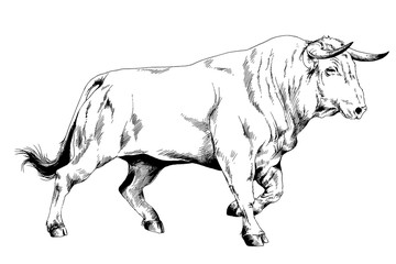 big bull striker with horns drawn in ink on white background sketch