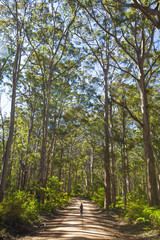 Boranup Forest, Leeuwin Naturaliste National Park, Western Australia