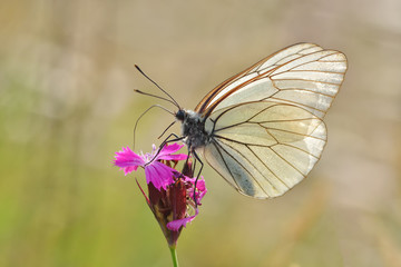 Superb butterfly sitting on a purple flower