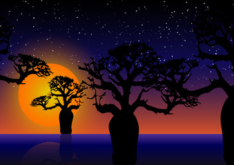 Baobab trees At night. Beautiful sunset night sky with stars over Boab tree silhouette. Multi color tropical woodland tree vector illustration  background