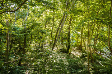 Forest on the bank of the river Pinios in the valley of Tempi, Thessaly - Greece