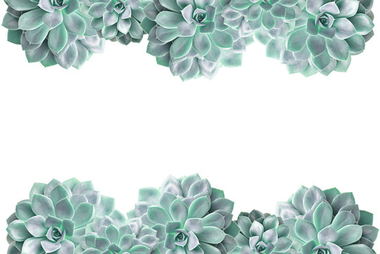 Frame of cactus succulent plant isolated on white