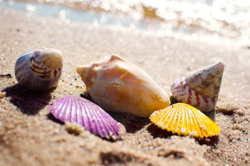 Shells in vivid colors on beach sand image picture