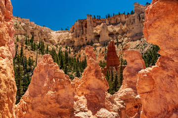 Multi Color Hoodoos in Bryce Canyon National Park