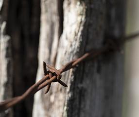 Barbed Wire Barbs Closeup II