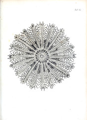 Illustration of coral