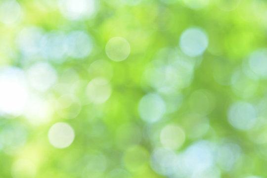 木漏れ日 新緑
